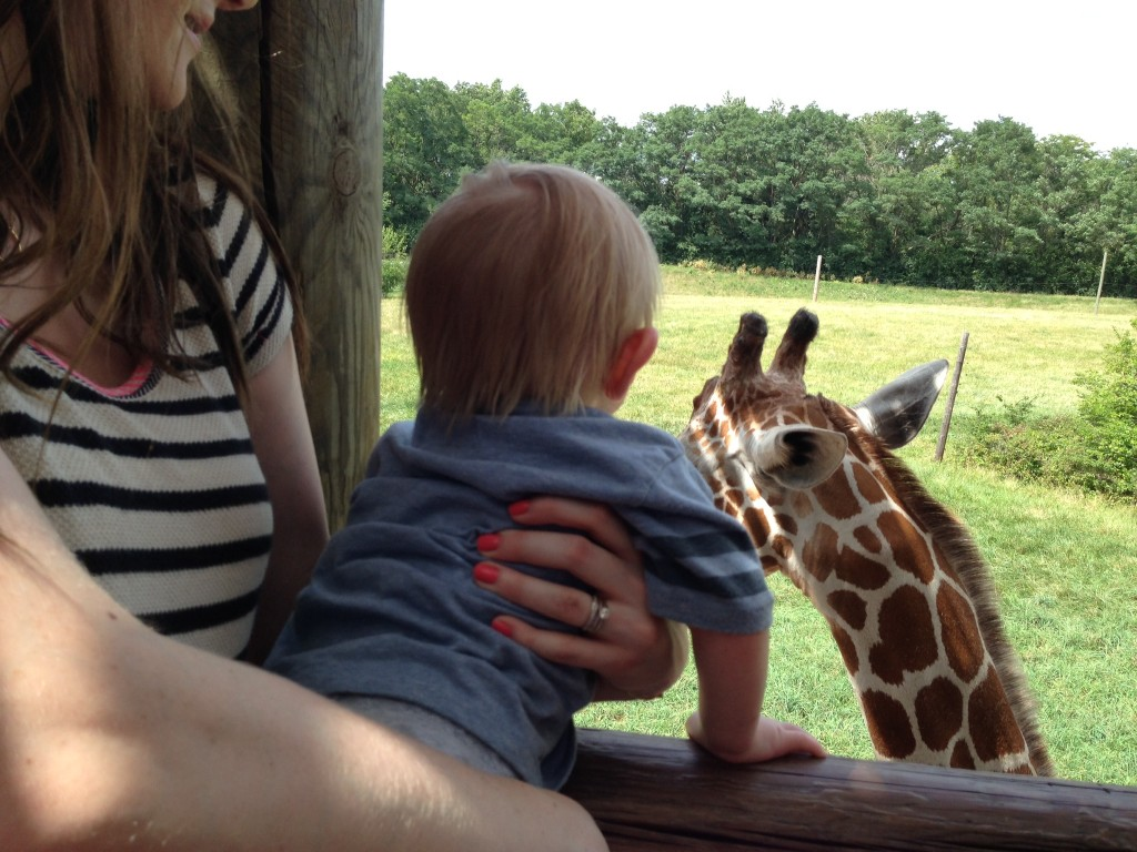giraffe-love.jpeg